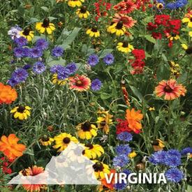 Virginia Blend, Wildflower Seed