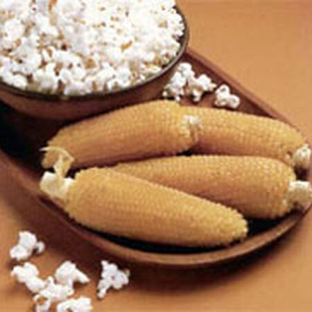 Robust 98114W White Popcorn, Corn Seed - Packet (1 oz.) image number null