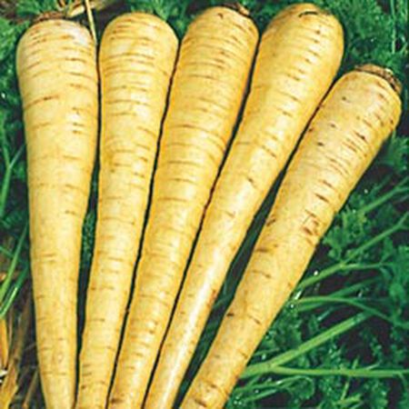 All American, Parsnip Seeds - Packet image number null