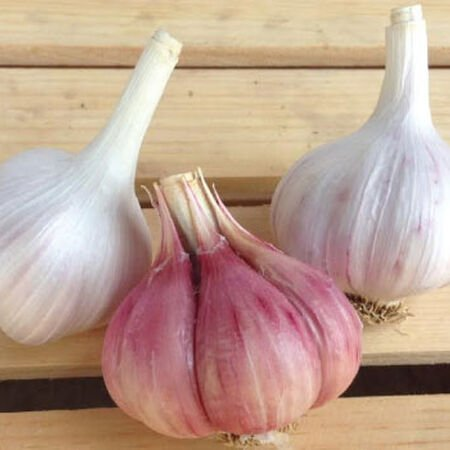 Red Toch, Garlic image number null