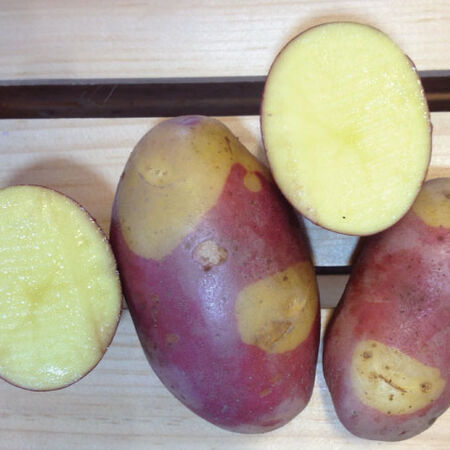 Pinto Gold, Seed Potatoes - 2 Pounds image number null