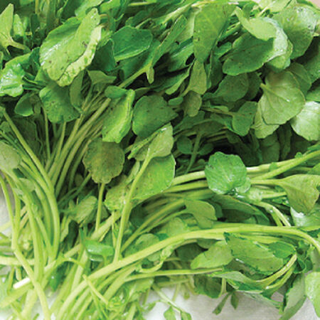 Upland, Cress Seed - Packet image number null