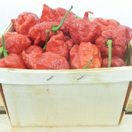 Carolina Reaper, Pepper Plants image number null