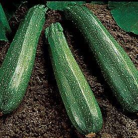 Spineless Beauty, Zucchini Seeds