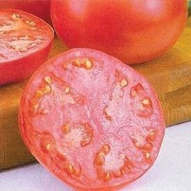 Pink Girl, (F1) Tomato Seeds