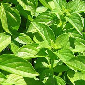 Lemon, Basil Seeds