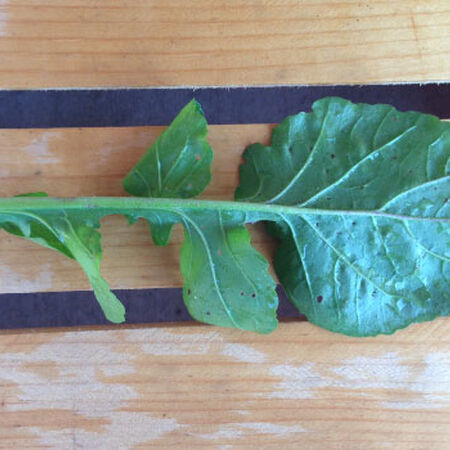 Roquette Arugula Seeds, Greens - Packet image number null