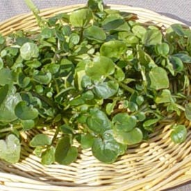 True Watercress, Cress Seed
