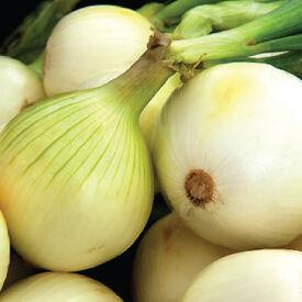 Snowball White, Onion Sets