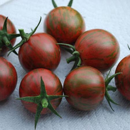 Purple Bumble Bee Rare Heirloom Tomato Plants Live 2
