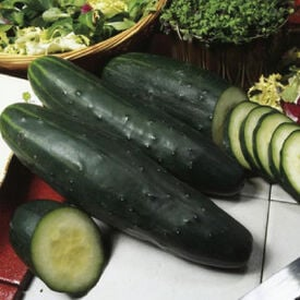 Marketer, Cucumber Seeds
