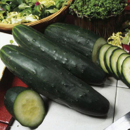 Marketer, Cucumber Seeds - Packet image number null