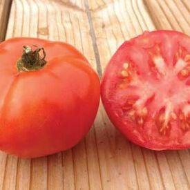 Marglobe Supreme, Tomato Seeds