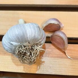 Creme de la Rasa, Garlic Bulb