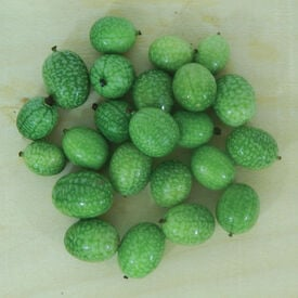 Mexican Sour Gherkin, Cucumber Seeds