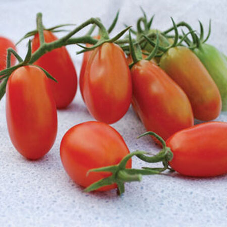 Baby Roma, Organic Tomato Seeds - Packet image number null