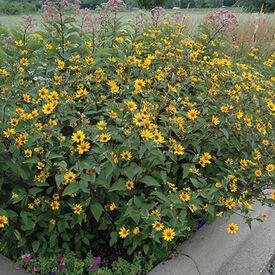 False, Sunflower Seeds