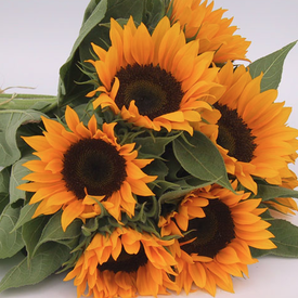 Zohar, Sunflower Seeds