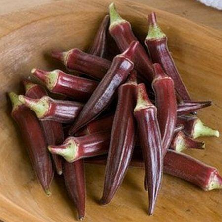 Red Burgundy, Okra Seed - Packet image number null