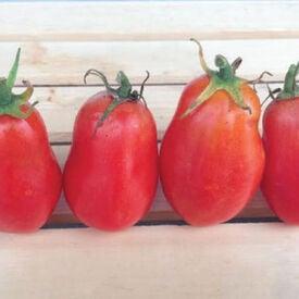 Roma, Tomato Seeds