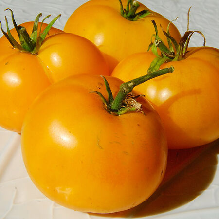 Azoychka, Tomato Seeds - Packet image number null