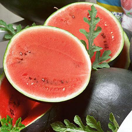 Bush Sugar Baby, Organic Watermelon Seeds - Packet image number null