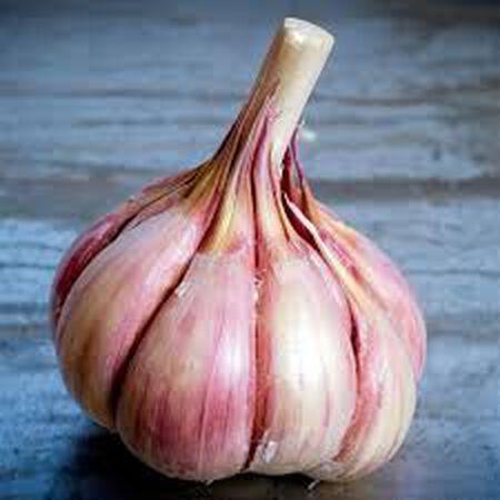 Persian Star, Garlic Bulbs image number null