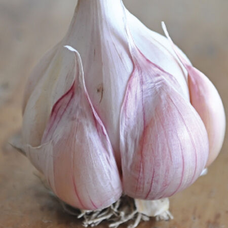 Nootka Rose, Garlic image number null