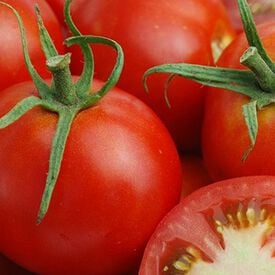 Glacier, Tomato Seeds