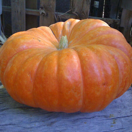 Cinderella, Pumpkin Seeds - Packet image number null