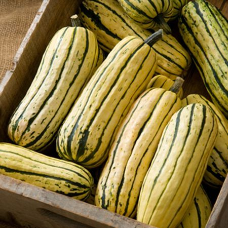 Delicata, Squash Seeds - Packet image number null
