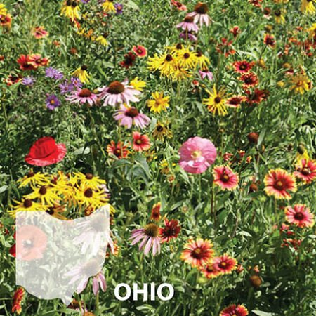 Ohio Blend, Wildflower Seed - 1 Ounce image number null