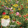 Ohio Blend, Wildflower Seed - 1 Ounce thumbnail number null