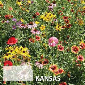 Kansas Blend, Wildflower Seed