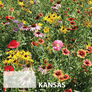 Kansas Blend, Wildflower Seed - 1 Ounce thumbnail number null