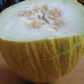 Golden Beauty Casaba, Melon Seeds