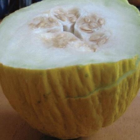 Golden Beauty Casaba, Melon Seeds - Packet image number null