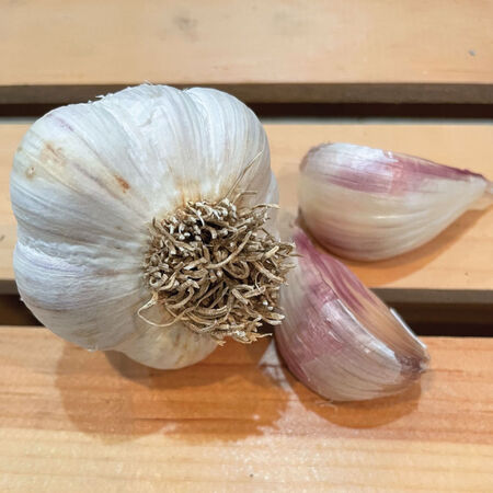 Montana Giant, Garlic Bulbs - 1/4 Pound image number null