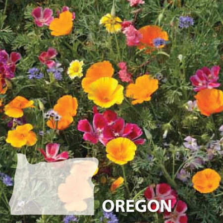 Oregon Blend, Wildflower Seed - 1 Ounce image number null