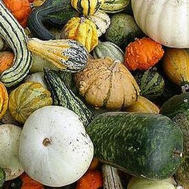 Large Mix, Gourd Seeds
