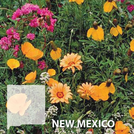 New Mexico Blend, Wildflower Seed - 1 Ounce image number null