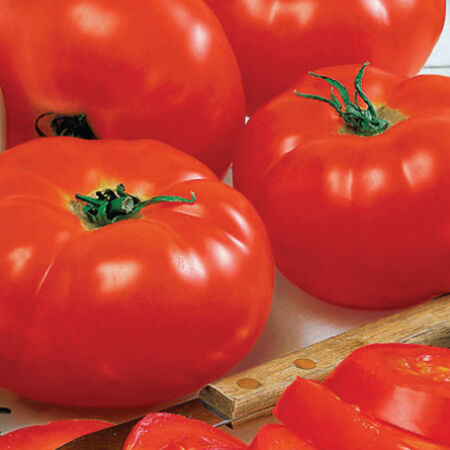 Big Beef, (F1) Tomato Seeds image number null