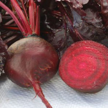 Bulls Blood, Beet Seeds - Packet image number null