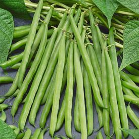 French Garden, Organic Bean Seeds