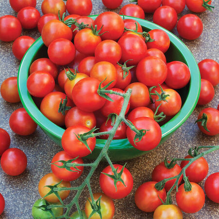 Supersweet 100, Tomato Seeds - Packet image number null