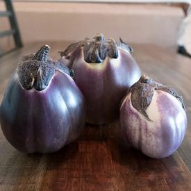 Prosperosa, Eggplant Seeds