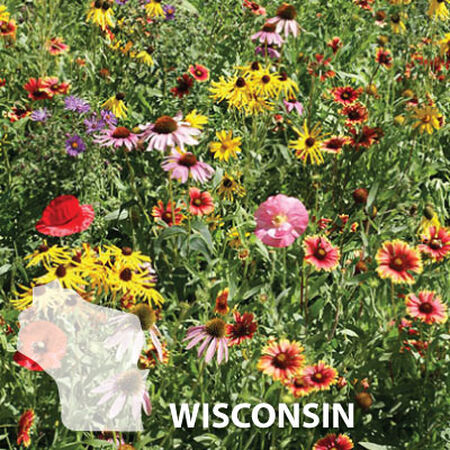 Wisconsin Blend, Wildflower Seed - 1 Ounce image number null