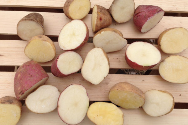 Scabbing Potatoes