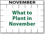 What to Plant in November