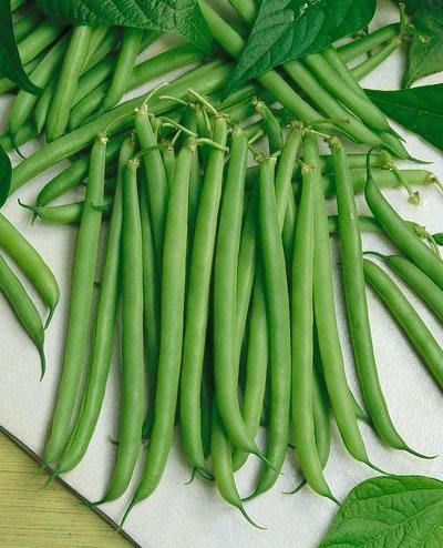 Bean Tips